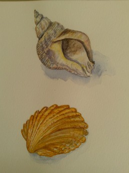Two Shells by Andrea Connolly