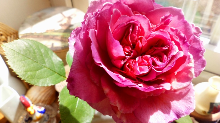 My French rose, by Andrea Connolly